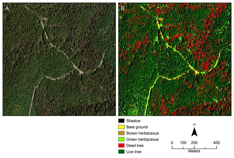 Complementing insect aerial surveys with satellite imagery | Rocky Mountain  Research Station